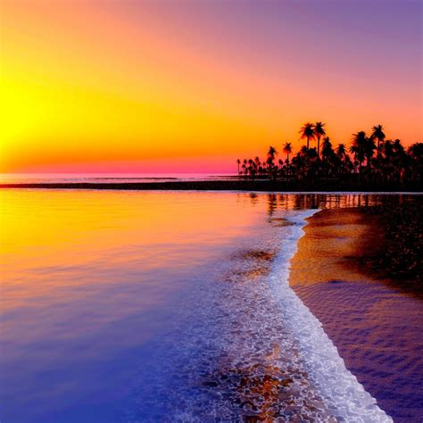 Sunset over beach of palm trees HD wallpaper | HD Latest